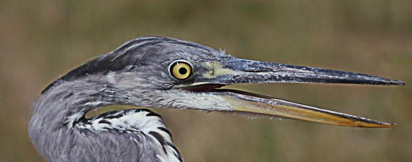{:hr}Promatranje ptica{:}{:en}Birding{:}{:de}Vogelbeobachtung{:}{:it}birdwatching{:}